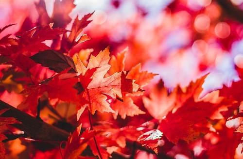 Багряный цвет