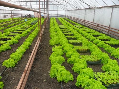 зелень на продажу